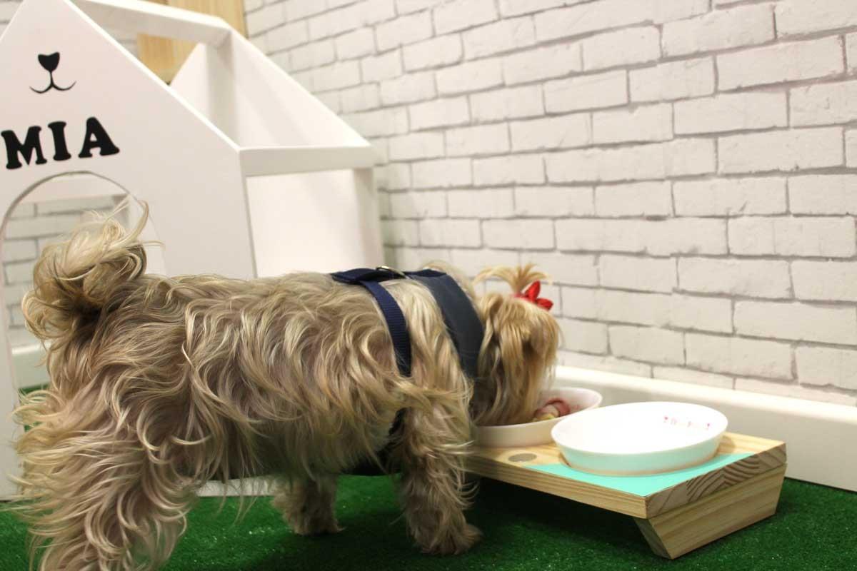 Comedero para perros bebedero para perros comedero doble for Comederos para perros