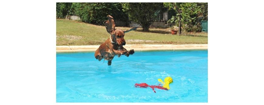 Mantener resquito a tu perro este verano